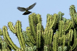 7_cactus_mexico_624x415_getty_nocredit